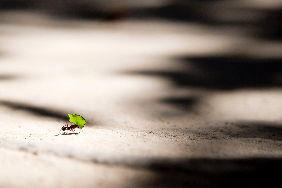 ¿Qué son y para qué sirven los micro hábitos?